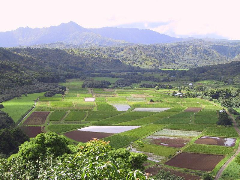 <b>Taro fields seen from Hanalei Overlook</b>   (Jul 25, 2001, 09:33am)