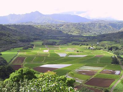 Taro fields seen from Hanalei Overlook   (Jul 25, 2001, 09:33am)