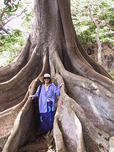 Daphne poses among roots of Morton Bay Fig tree   (Jul 24, 2001, 10:18am)