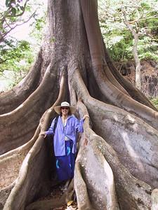 Daphne poses among roots of Morton Bay Fig tree   (Jul 24, 2001, 10:18am)