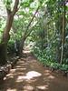 <b>A walkway through Allerton Garden</b>   (Jul 24, 2001, 09:34am)