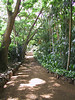 <b>A walkway through Allerton Garden</b>   (Jul 24, 2001, 09:34am)