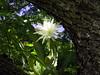 <b>Orchid Cactus</b>   (Jul 24, 2001, 09:52am)
