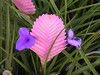 <b>We call this flower Fred since we dont know its real name</b>   (Jul 24, 2001, 09:26am)