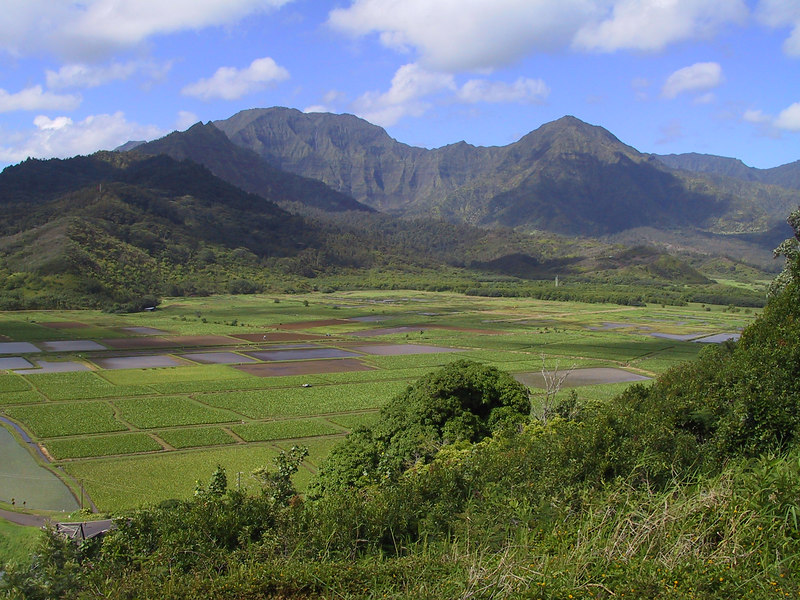 <b>Hanalei Valley seen from Hanalei Overlook</b>   (Jul 25, 2001, 09:33am)