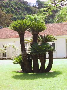 Tree and house on Lawai beach   (Jul 24, 2001, 10:49am)