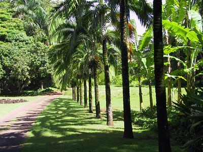 Walkway through the Allerton Garden   (Jul 24, 2001, 10:36am)