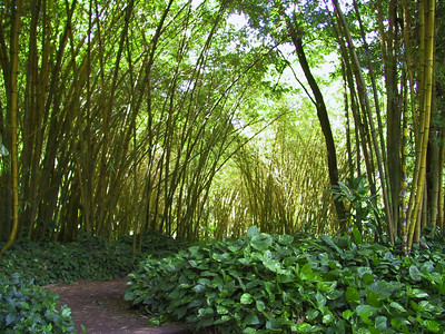 Bamboo with Pothos plants   (Jul 24, 2001, 10:34am)