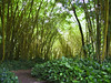 <b>Bamboo with Pothos plants</b>   (Jul 24, 2001, 10:34am)