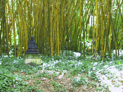 Budda statue against Bamboo in Allerton Garden   (Jul 24, 2001, 10:36am)