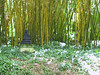 <b>Budda statue against Bamboo in Allerton Garden</b>   (Jul 24, 2001, 10:36am)