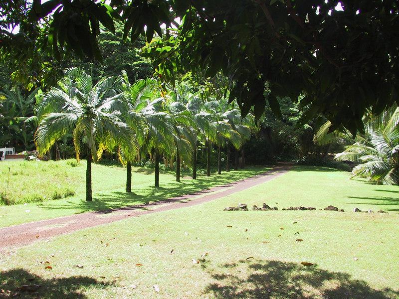 <b>Walkway through the Allerton Garden</b>   (Jul 24, 2001, 10:26am)