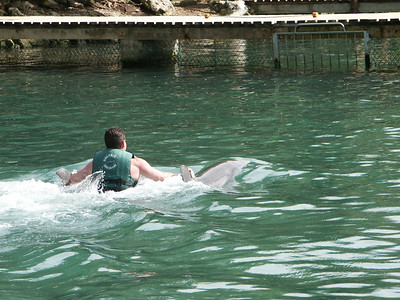 Tourists play with Dolphins   (Dec 28, 2002, 01:08pm)