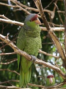 Amazon parrot   (Dec 29, 2002, 12:16pm)