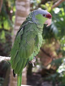 Amazon parrot   (Dec 29, 2002, 12:24pm)