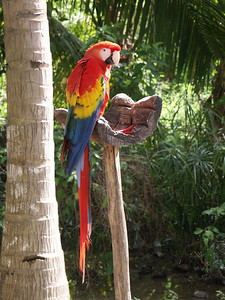 Profile of a Macaw parrot   (Dec 29, 2002, 11:50am)