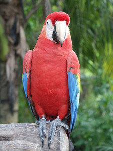 Macaw parrot   (Dec 29, 2002, 11:53am)
