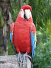 <b>Macaw parrot</b>   (Dec 29, 2002, 11:53am)