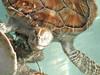 <b>Close up of turtle head</b>   (Dec 29, 2002, 03:13pm)