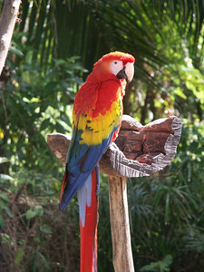 Macaw parrot on feeder   (Dec 29, 2002, 12:23pm)