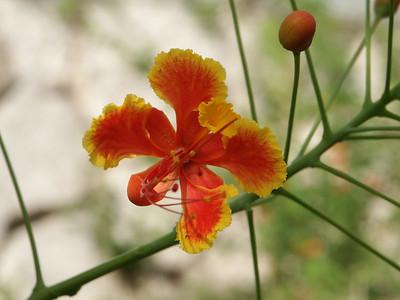 Tropical flower in butter pavilion   (Dec 29, 2002, 01:25pm)