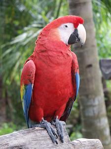 Macaw parrot at Xcaret   (Dec 29, 2002, 11:52am)