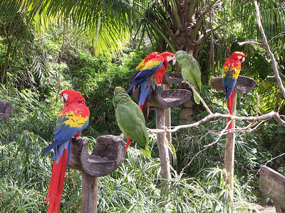 Parrots at Xcaret   (Dec 29, 2002, 11:49am)