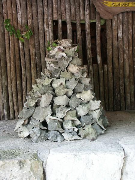 <b>Conch shells at Mayan village</b>   (Dec 29, 2002, 01:09pm)