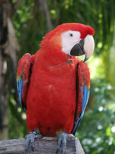 Macaw parrot   (Dec 29, 2002, 12:22pm)