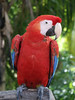 <b>Macaw parrot</b>   (Dec 29, 2002, 12:22pm)