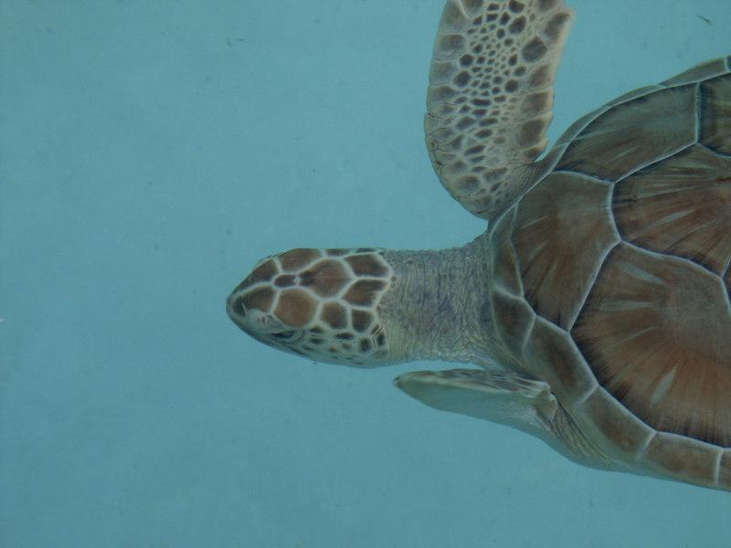 <b>Swimming turtle</b>   (Dec 29, 2002, 03:16pm)
