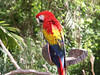 <b>Macaw parrot</b>   (Dec 29, 2002, 12:17pm)