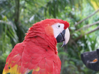Head of a Macaw parrot   (Dec 29, 2002, 11:53am)