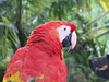 <b>Head of a Macaw parrot</b>   (Dec 29, 2002, 11:53am)
