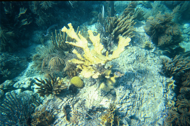 <b>More elkhorn coral at the Indians</b>   (Jul 02, 2002, 10:00am)