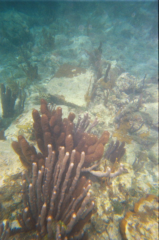 <b>Pillar corals at Great Harbour</b>   (Jul 02, 2002, 03:00pm)
