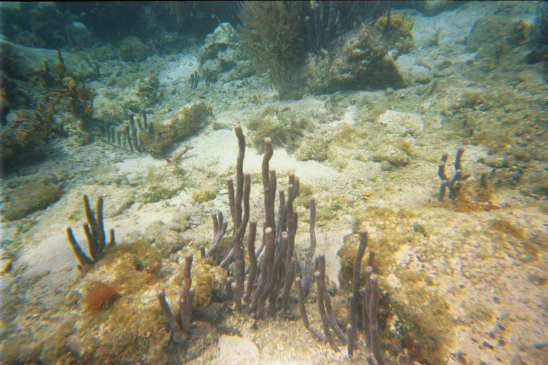 <b>Coral formations at Great Harbour</b>   (Jul 02, 2002, 03:00pm)