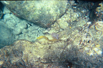 Small green moray eel at the caves   (Jul 02, 2002, 12:00pm)