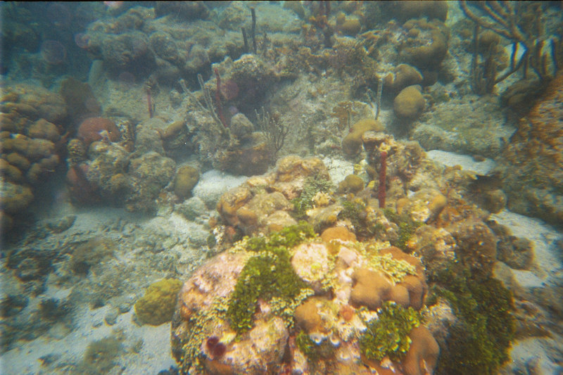<b>Coral formations in Great Harbour</b>   (Jul 02, 2002, 03:00pm)