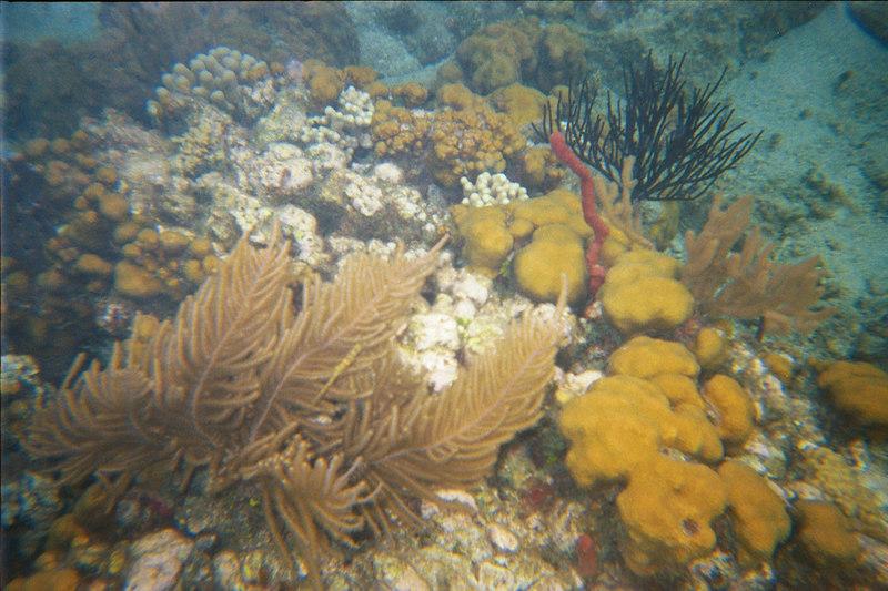 <b>More interesting coral at Great Harbour</b>   (Jul 02, 2002, 03:00pm)
