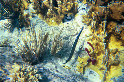 Another Trumpetfish at the Indians   (Jul 02, 2002, 10:00am)