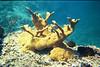 <b>Elkhorn coral at the Indians</b>   (Jul 02, 2002, 10:00am)