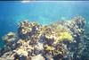 <b>Coral at the Indians</b>   (Jul 02, 2002, 10:00am)