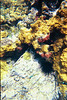 <b>Coral formations at the Indians</b>   (Jul 02, 2002, 10:00am)