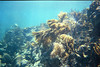 <b>Soft coral at the Indians</b>   (Jul 02, 2002, 10:00am)