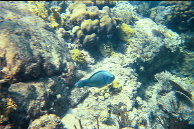 Parrotfish at the Indians   (Jul 02, 2002, 10:00am)