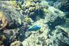 <b>Parrotfish at the Indians</b>   (Jul 02, 2002, 10:00am)