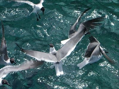 Seagulls feeding of the port side   (Jul 02, 2002, 10:58am)