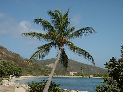 Palm tree with Sprat Bay in the background   (Jul 03, 2002, 08:31am)