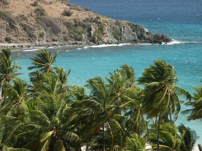 <b>Palm trees overlooking Deadman's Bay</b>   (Jul 03, 2002, 09:14am)